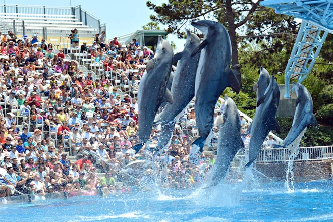 "The all new ""Dolphin Days"" features bottlenose dolphins and pilot whales"