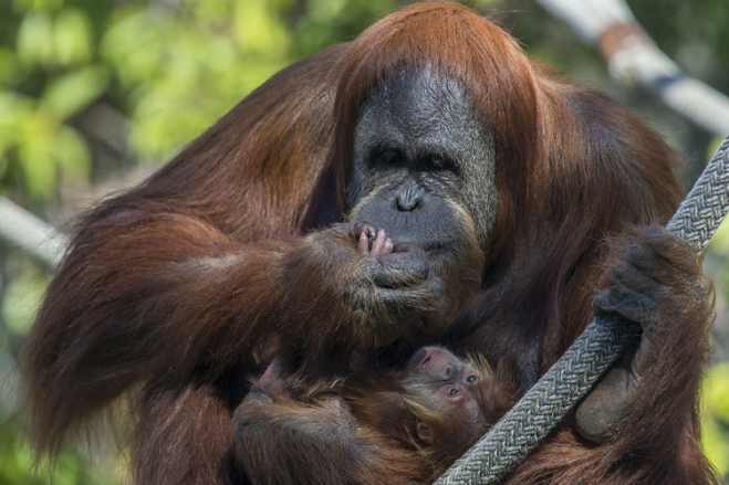 Kids go free to San Diego Zoo through the end of October. Check out TicketsatWork.com for more incredible ticket options!