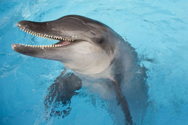 Save on SeaWorld tickets at TicketsatWork.com!