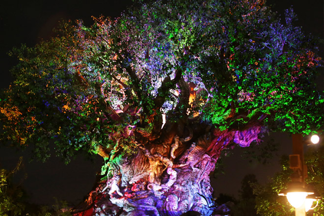 The tree of life will come alive at Disney's Animal Kingdom