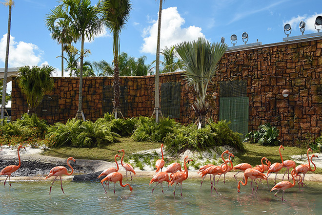 The beautiful flock of flamingos will now live in the newly designed entry plaza