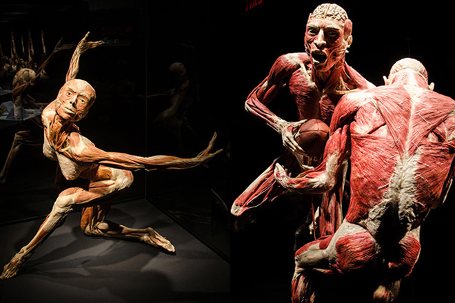 Body Worlds: Pulse exhibit is an inspiring multimedia experience of the human body
