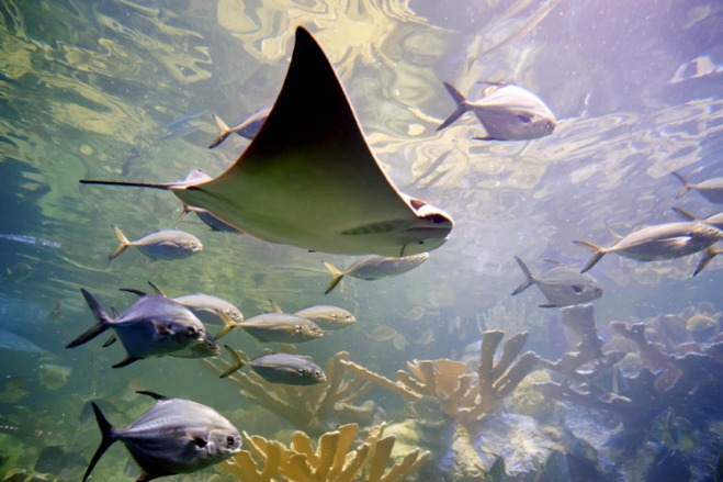 Explore The New England Aquarium with savings from TicketsatWork.com.