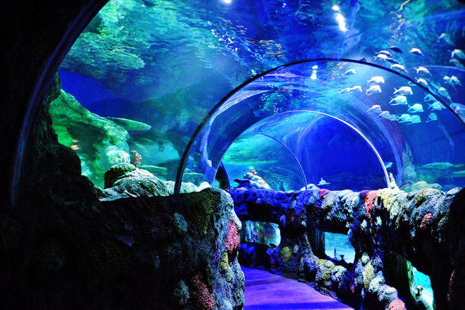 Save on tickets to SEA LIFE Aquarium in Charlotte, NC at TicketsatWork.com!