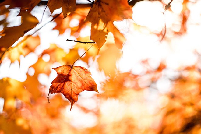 Fall Fun: Top 10 Things to Do this Season - Get Travel & Entertainment Tickets at TicketsatWork.com