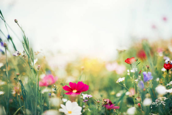 Spring Bucket List: 10 Ways to Celebrate the New Season